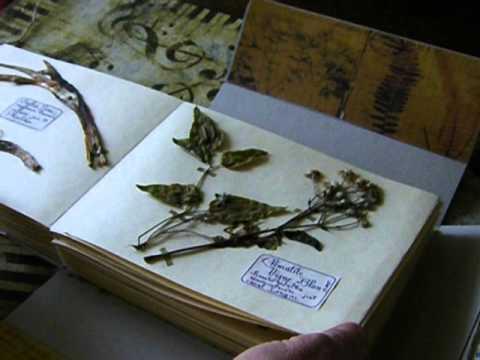 Herbier d 39 art youtube - Faire un herbier ...