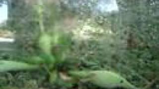 Biosfera- humedal de Palo Verde, Guanacaste, Costa Rica