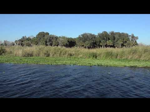 St Johns River Eco tour Charters Promo