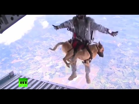 RAW: Dogs go through parachute training for Colombia military