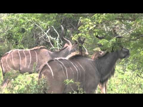 Hluhluwe--iMfolozi Park, South Africa Tourism, Mobile Version