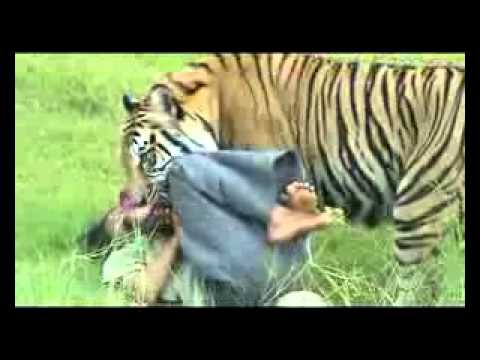 Porno Manusia Vs Harimau Bg3.flv video