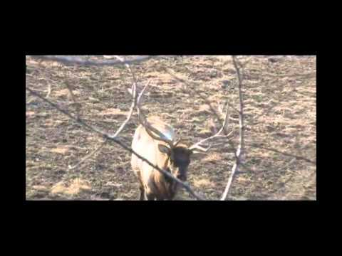 "jared ""69"" allen spears an elk, relentless pursuit youtube"