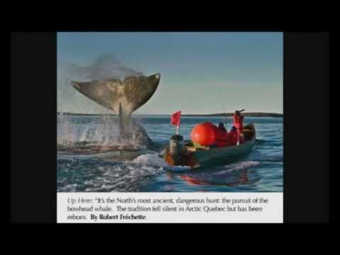 Ecology of the bowhead whale by Véronique Gélinas.wmv