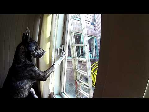 Dog unlocks window, sneaks out of house
