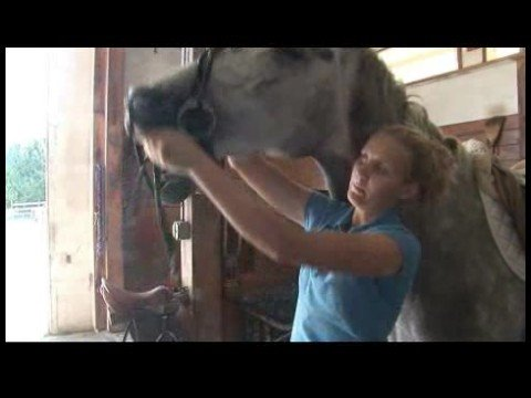 Horse Care & Riding : How to Bridle a Horse