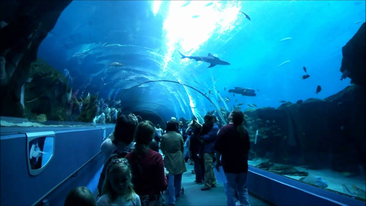 The most amazing aquarium in the world youtube for Aquarium video
