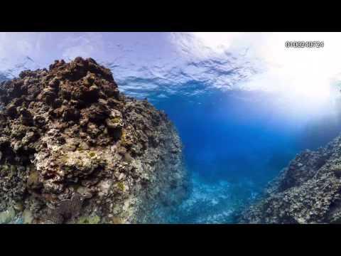 Myrmidon Reef - 0100240001