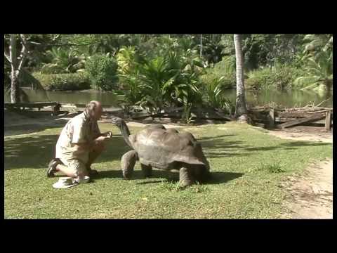 Seychelles giant  tortoise Adam
