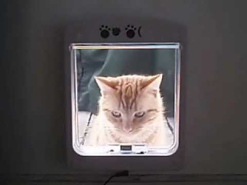 teach cat to use cat flap
