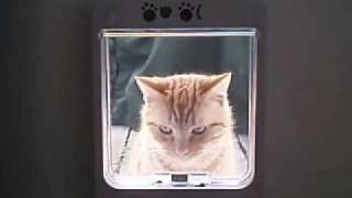 how to make a cat flap in minecraft