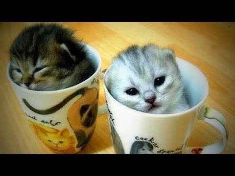 Cute Cats 🐱🐱 Funny and Crazy Cats (Full) [Funny Pets]