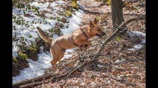 An Angel Needs a Home -- www.jeju.dog