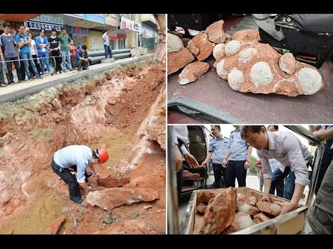 213 dinosaur eggs seized in China Home