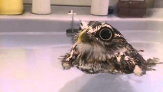 Sink EXPLODES While Bird Takes Bath!