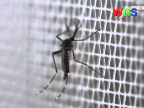 MALARIA FIGHT Ugandan Scientists to produce GMO Mosquitoes