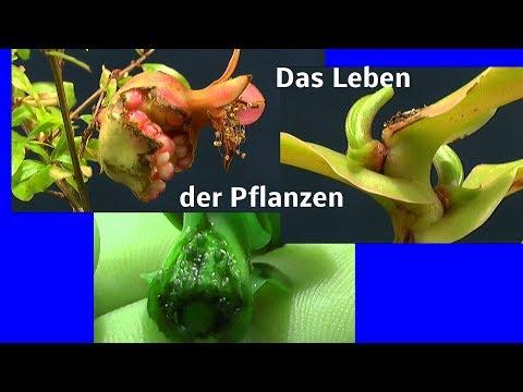 Die Welt der Pflanzen, können Pflanzen denken?