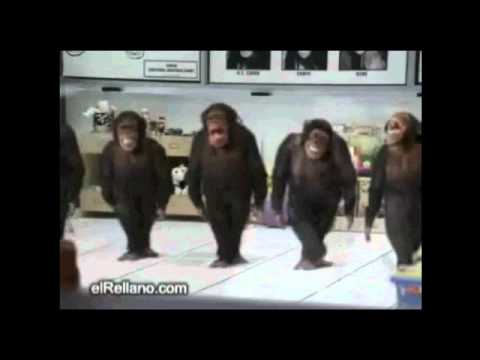 Monkeys River Dancing Crazy Apes Dancing River Dance