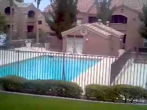 8101 Flamingo pool 2