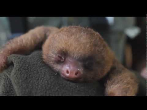 Cutest Animals On Planet Earth - 2013 Compilation