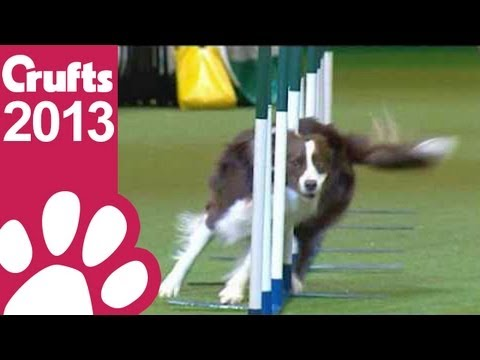 Agility - Kennel Club Novice Cup - Agility - Crufts 2013