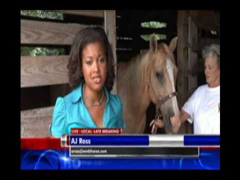 !!SC MAN CHARGED WITH HAVING SEX WITH A HORSE(SUGAR) ... AGAIN:HEAR FROM THE OWNER & ACCUSED!!