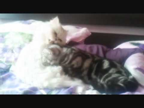 Cutest Gay Kittens Ever (kitten Massage) video