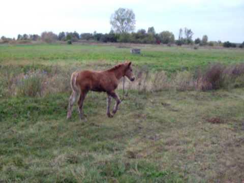 konie ziutka na pastwisku - skaryszew - jesien 2009.