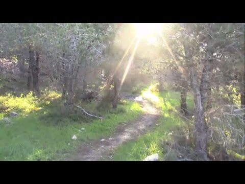 Virtual Tour - Stunning Jerusalem Forest Walkthrough