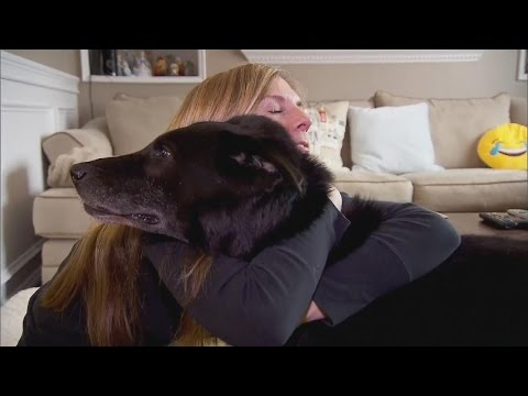 Meet The Family Who Adopted Bear, The Dog Allegedly Chained Up For 15 Years