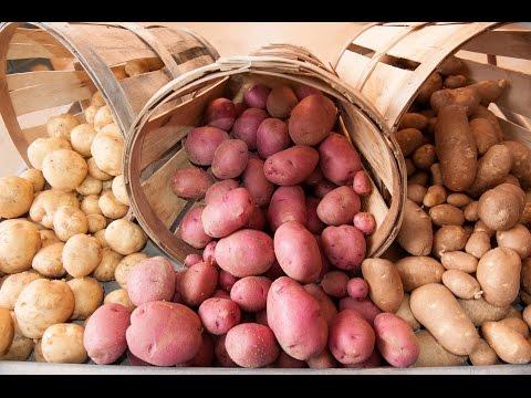 24.Картофель  Выбираем сорта картофеля