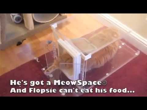Meowspace 174 Cat Feeder Amp Litter Box Control Station Youtube