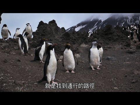 【地球:奇蹟的一天】幕後花絮:南極企鵝解放篇