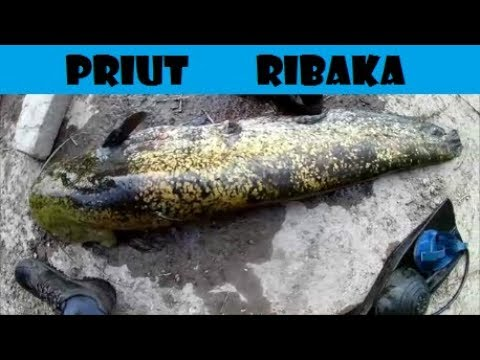 волга кама рыбалка