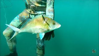 Spearfishing bombo with Hopper