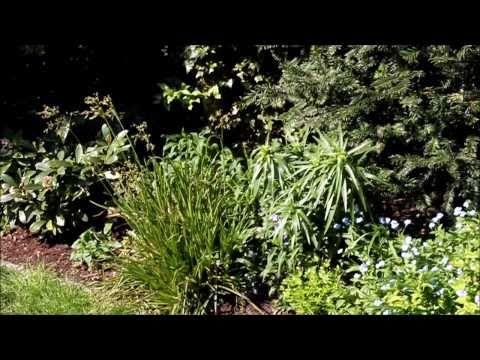 Gartenrundgang NewWonder555 Stellt Sich Vor - NewWonder555