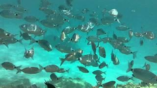 Snorkeling a Villasimius Sardegna.mp4