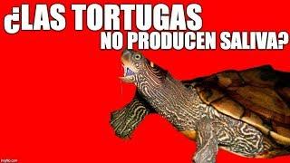 ¿las tortugas producen saliva?