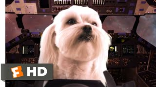 Star Paws (2016) - Cat & Dog Fight Scene (3/10) | Movieclips