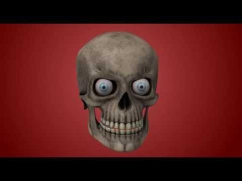 test 3D skull thumbnail