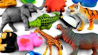 Learn Wild Zoo Animals Names Safari Animals Names Education Video For Kids