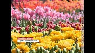 15.04.2018 Все краски весны. В Никитском ботаническом саду – Парад тюльпанов
