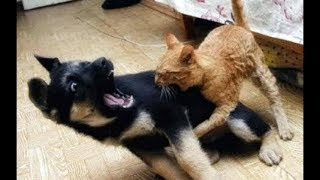 Cats FIGHTING Dogs Compilation (brutal) FUNNY