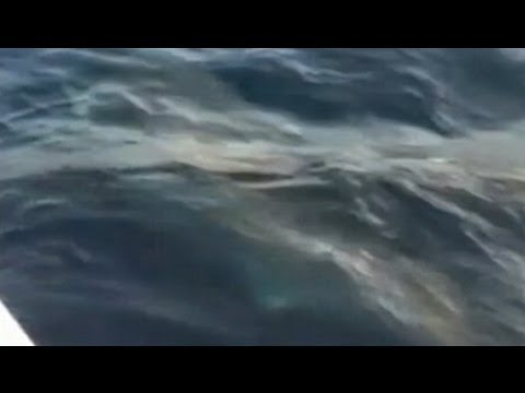 Great White Shark Caught by Fisherman: Video Caught on Tape