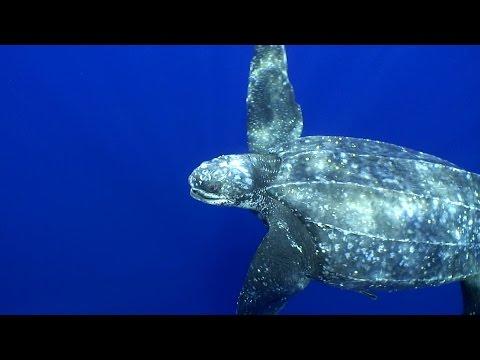 Trinidad: Saving the Turtles