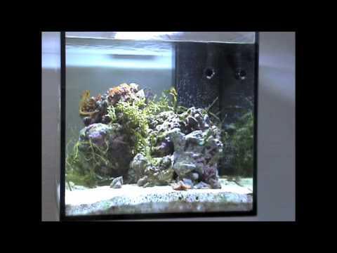 My seahorse aquarium youtube for Seahorse fish tank
