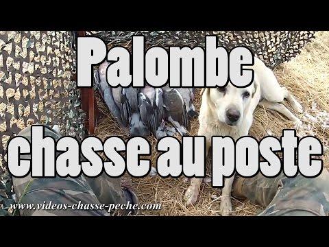 Palombe, Chasse Au Poste - GoPro HD 2