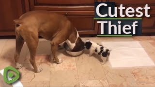 Tiny little puppy adorably steals food bowl from much bigger dog