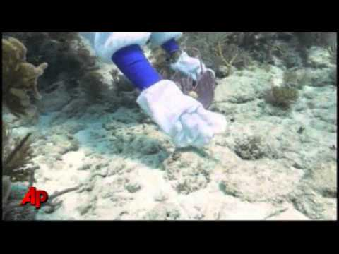 Raw Video: Scuba Diving Easter Bunny