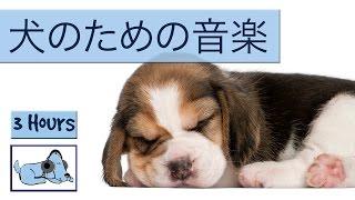 犬の音楽は非常に活発子犬を落ち着かせるために!